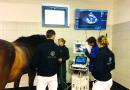 Neue Hoffnung für herzkranke Pferde