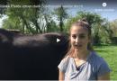Lungenkranke Pferde atmen dank Soletherapie wieder durch
