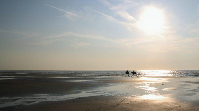 Pferde in Seenot: Ausritt vor Cuxhaven endet mit Rettungsaktion
