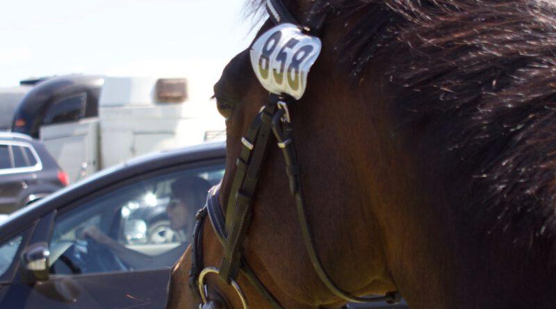 """Corona-Folgen im Pferdesport: """"Es wird knapper werden"""""""
