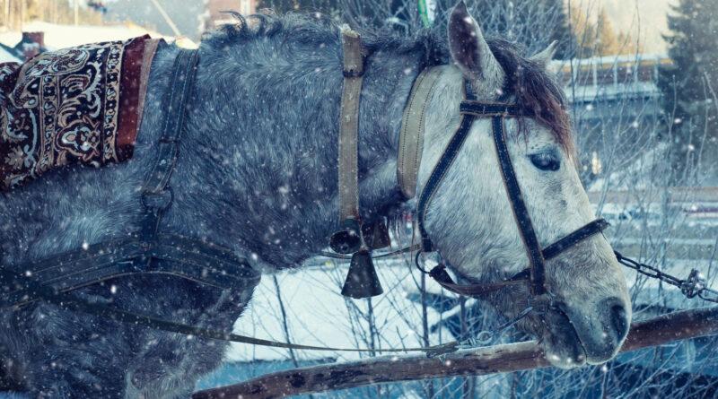 Zustellung mit dem Pferd: Amazonbote sattelt auf